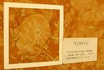 kaseki01.jpg